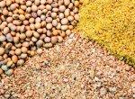 معضل-جهانی-خوراک-دام-و-طیور